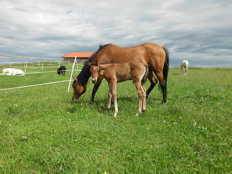 Pferd mit Reithalle im Hintergrund
