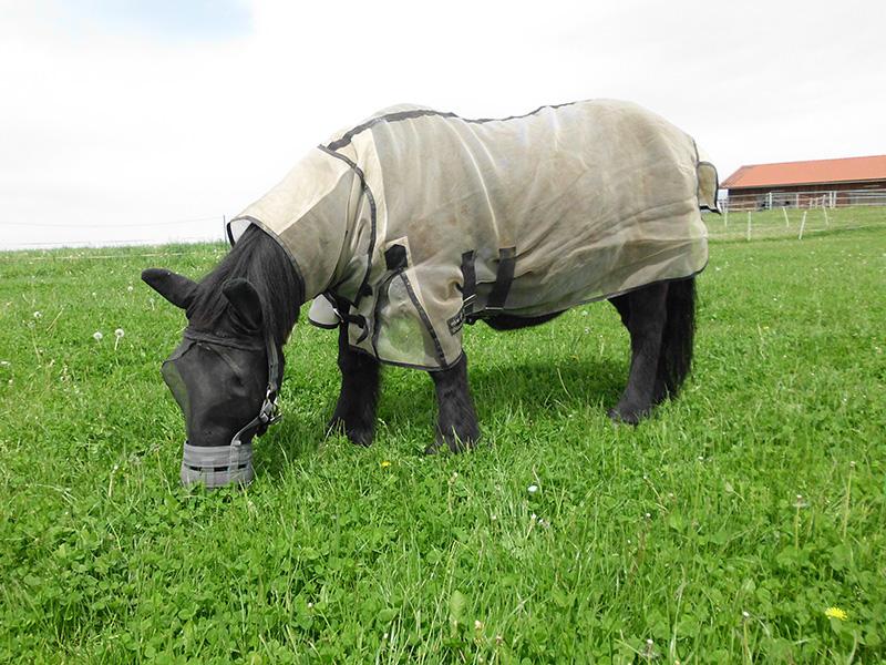Schwarzes Pferd mit Reithalle im Hintergrund