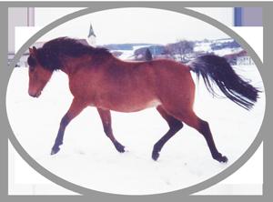 Pferdeburg